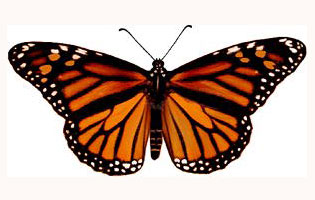 illuminati symbols butterfly List of Illuminati Symbols and Meanings