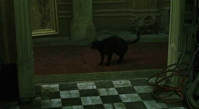 illuminati-symbols-matrix-checkered-cat