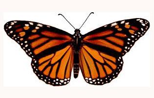 illuminati-symbols-butterfly